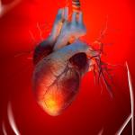 Marla Ahlgrimm | Heart Disease Basics